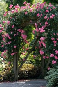 A rose arch for romance in the garden