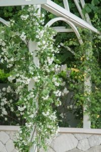Climbing roses for colour at a higher level